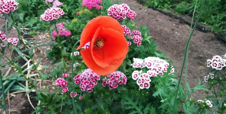 Flowers Week