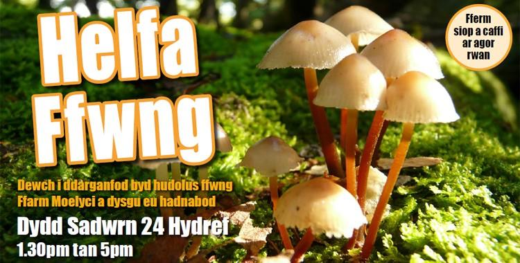 Helfa Ffwng : Fungi Foray