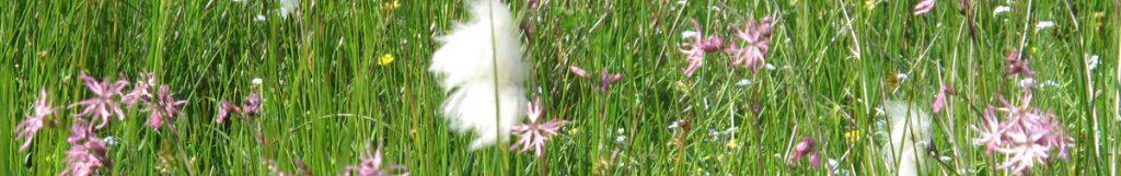 Wildflower Field 001 Banner