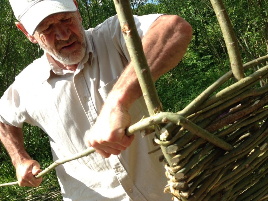 Mike demonstrating hurdle making with some recently coppiced willow