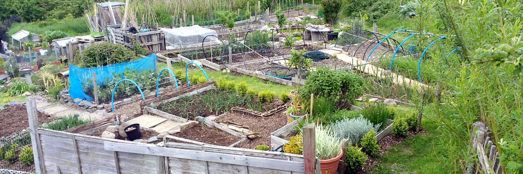 60+ Allotments